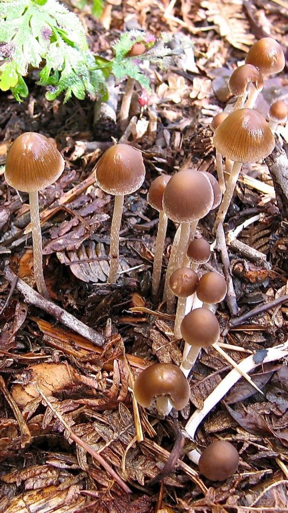 Feasting fungi produce flushes of toadstools.