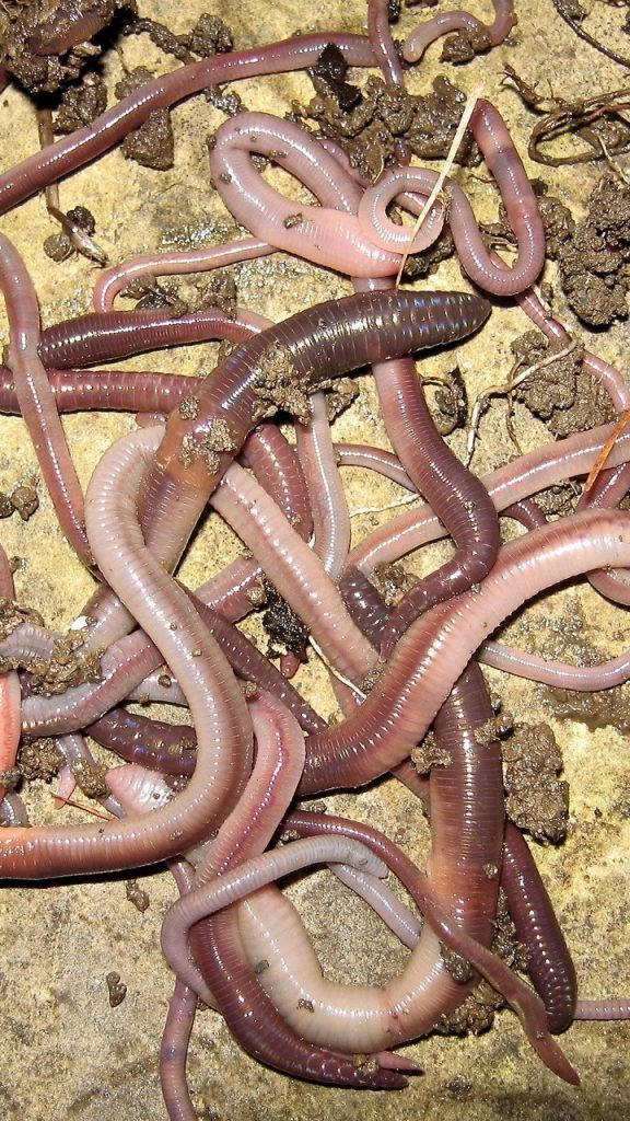 Earthworms will flourish in revitalised soil.