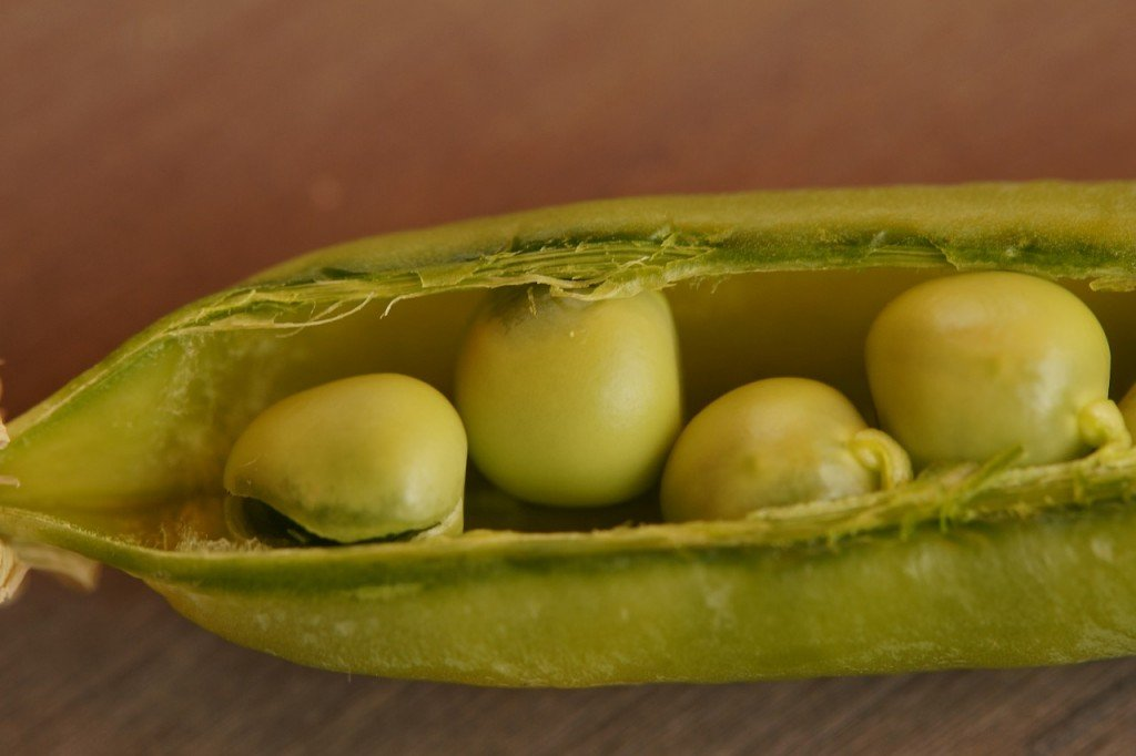 Peas in bed