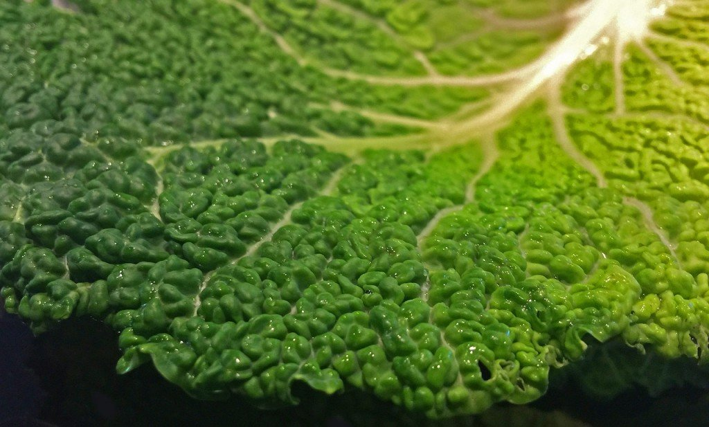 Cabbage Leaf