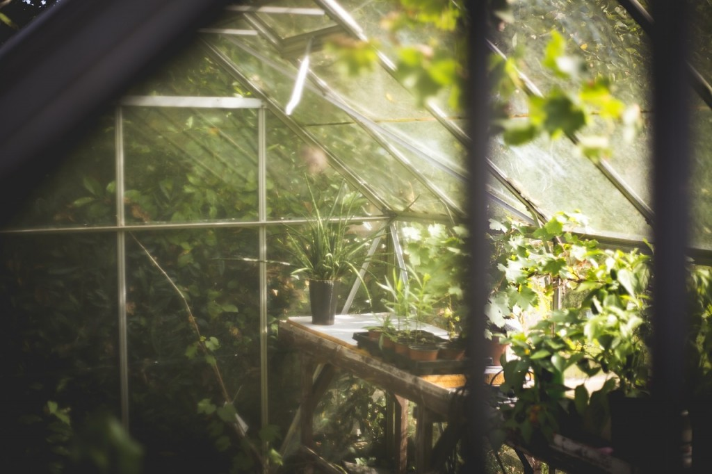 Unkempt Greenhouse