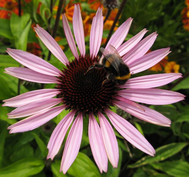 Neonic insecticides pollute plants from top to toe. Even nectar and pollen collected by bees and other insects becomes tainted.