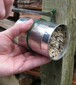 Canned Bees - Location, Location Location