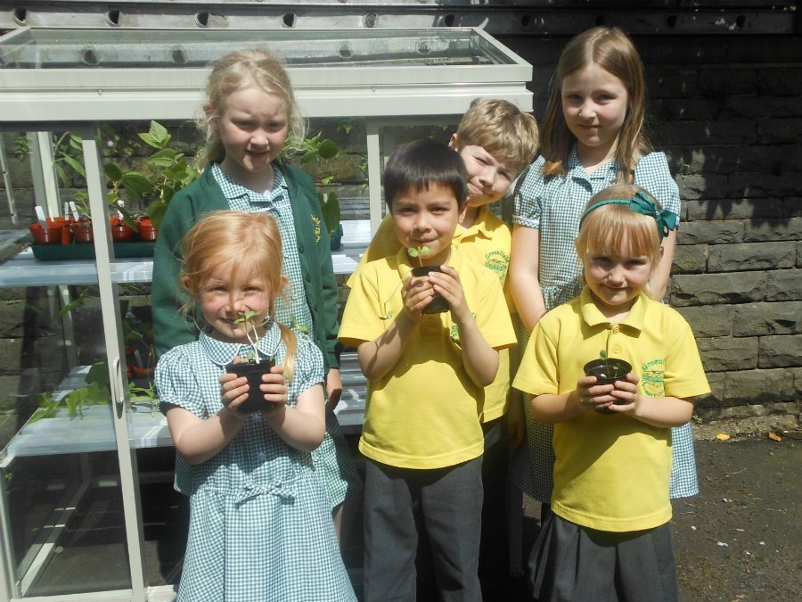 Class 3 with Plants at Greenfield Primary School