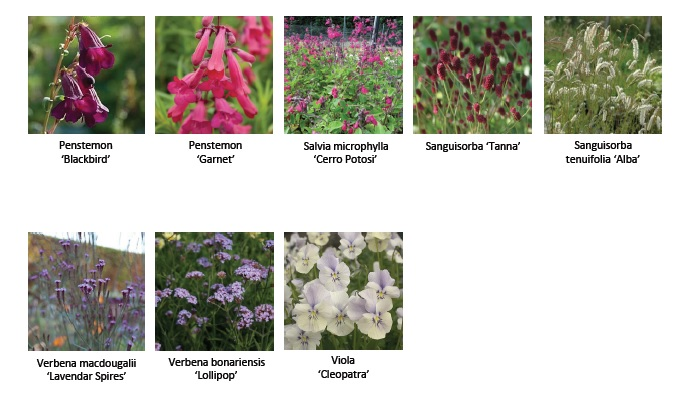 HB Hampton Court Flower Show Plant List 2 2014