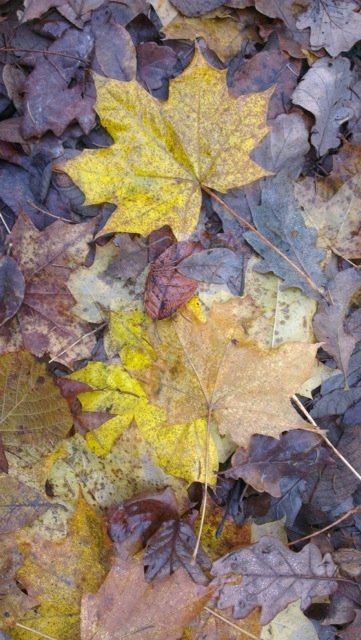 Of all nature's free gifts, autumn leaves are both seriously useful, and infinitely renewable.