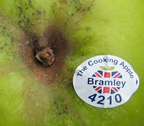Please fruit sellers, could we have wormpostable labels, not never-ever-rot plastic?