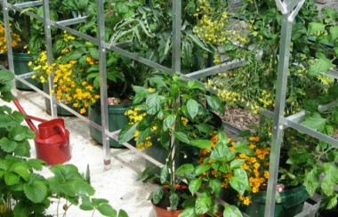 Up and running greenhouse