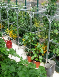 Now my greenhouse is up and productive I'm slowly paying off my ecological debt.