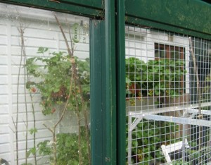 Re-glazing my greenhouse doors with panels of 1cm square rigid wire mesh has actually made my greenhouse more earth-friendly.