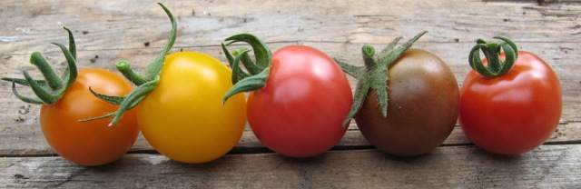 A topsy-turvy growing season meant my greenhouse tomatoes only began to ripen in mid-August.
