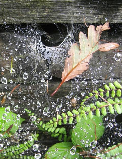 In its nooks and crannies, spiders lay out their traps.