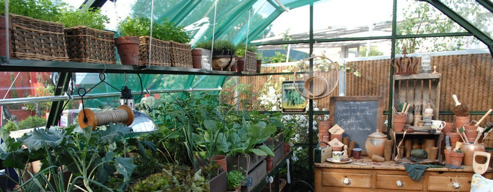 Inside a Hartley greenhouse