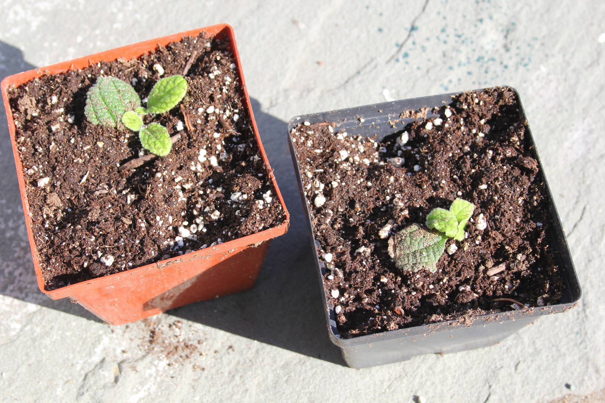 new-plants-have-just-been-potted-up-old-dark-green-leaf