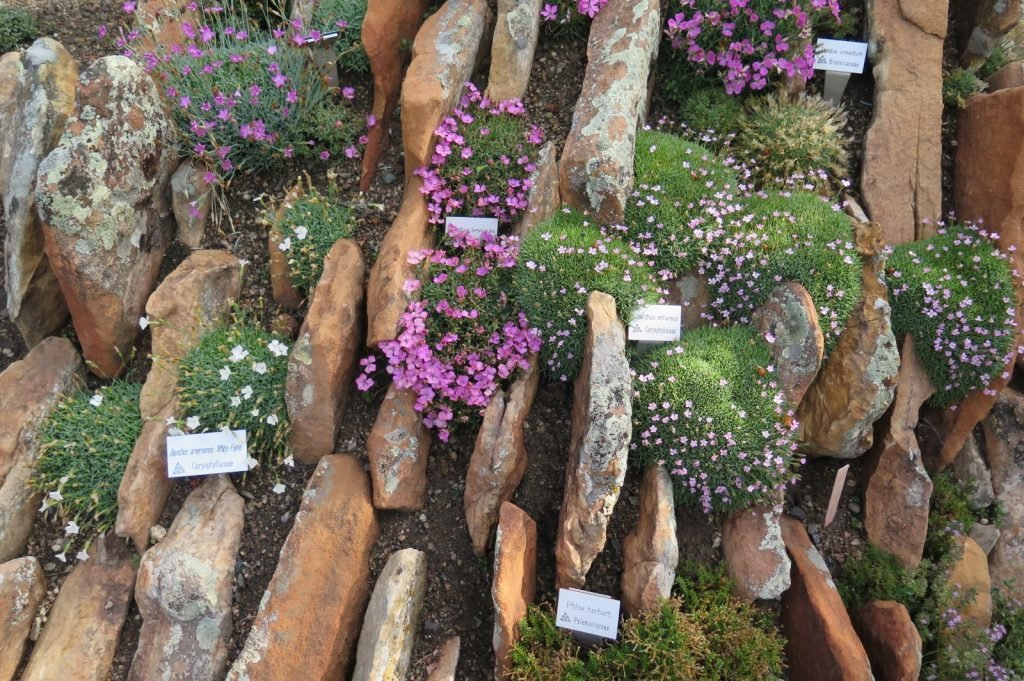 Rockeries Troughs And Crevice Gardens Oh My By Ethne Clarke