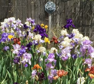 Array of blue and purple flowers