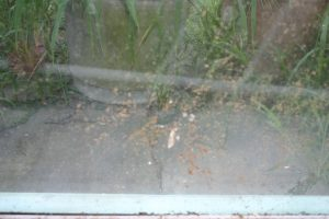 Dirty windows prevent light from reaching your plants - Sept 2016