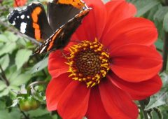 butterfly on red flower