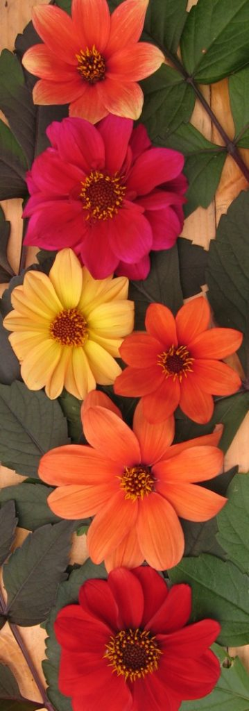 red, yellow and orange flowers