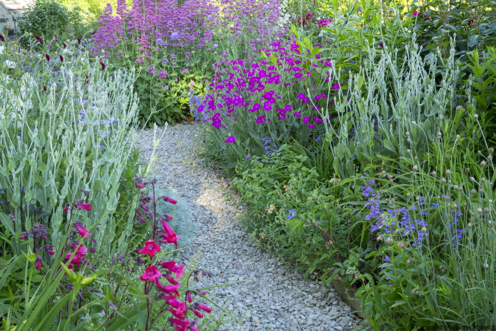 Gravel path through perennial border, penstemon, Lychnis coronaria, geranium
