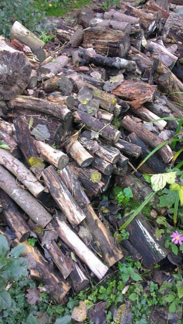 Don't burn or export the thicker wood from your garden. A pile of loosely stacked logs in a corner of your plot will create a rich wildlife habitat that money simply can't buy.