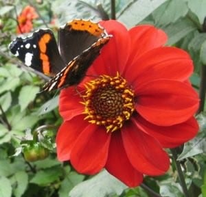 Butterfly on red plant