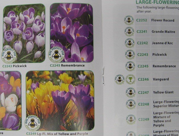 Some bulb catalogues are plastered with the RHS's 'perfect for pollinators' logo, but say nothing about whether the bulbs have been treated with pesticides…