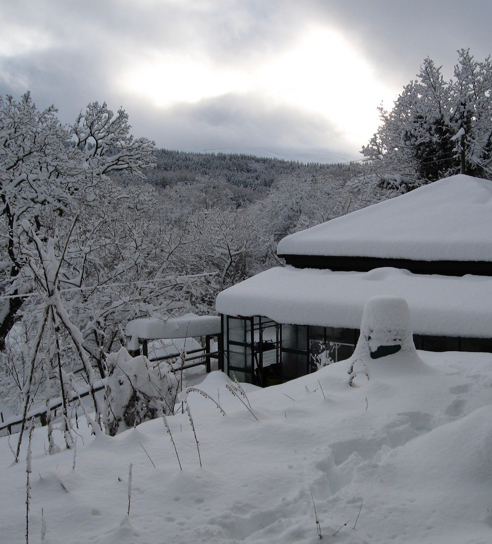 snow-covered-garden